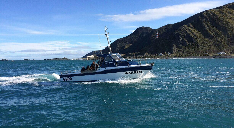 Boat Tours, Cape Palliser Activities, Cray Fish Fishing